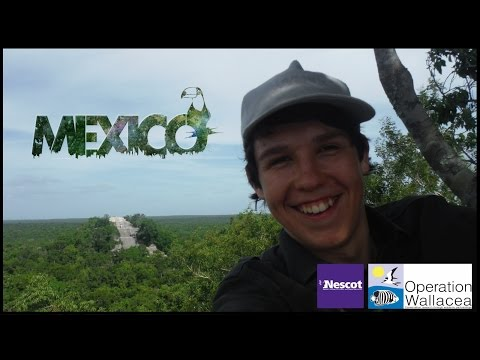 Expedition Mexico (2014) - A Documentary w/NESCOT & Operation Wallacea