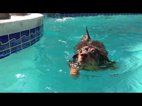 My little swimming buddy