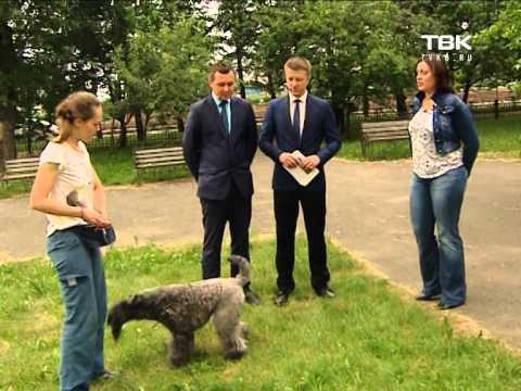 Собака керри блю терьер: описание и характеристика породы