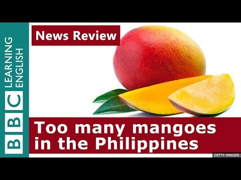 mango-surplus-in-the-philippines:-news-review