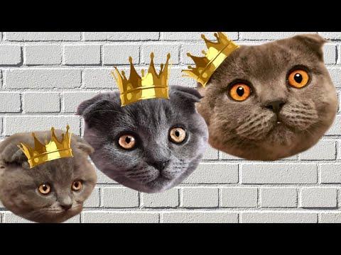 Щаас СПОЮ! Говорящий кот поет. Песня кота Космоса