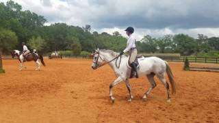 Knight in Shining Armor ridden by Faith Joiner Modified Children's Hunter Under Saddle