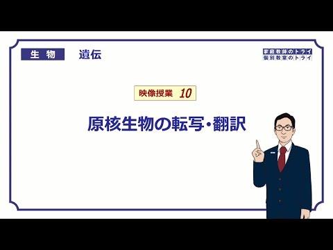 高校生物 遺伝10 原核生物の転写・翻訳13分