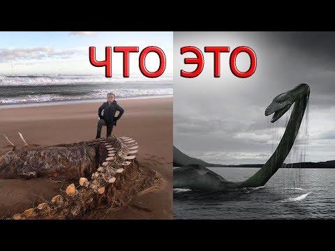 Огромный скелет загадочного существа похожего на Несси выбросило на побережье Шотландии