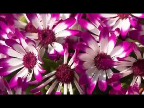Beautiful flowers wallpapers for desktop free youtube voltagebd Gallery