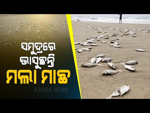Scores Of Dead Fish Washed Ashore At Puri Beach