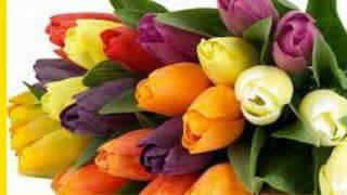 день рождения поздравления на татарском