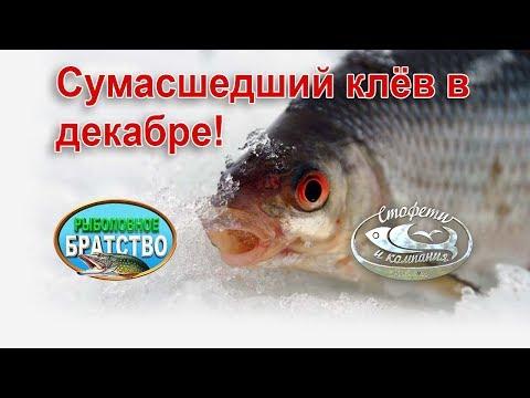 летняя рыбалка на щуку - 2017-12-25 14:13:49