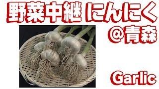 野菜中継 青森 「にんにく」...