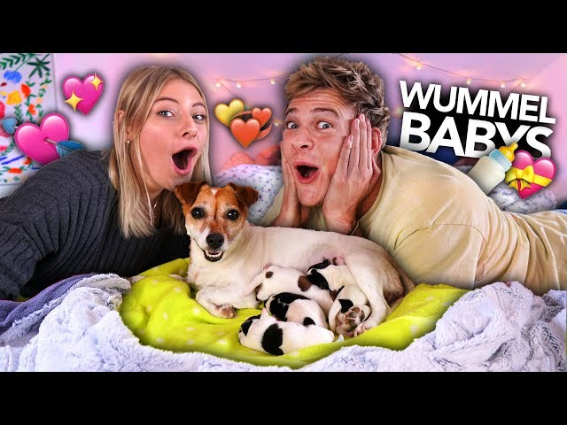 WUMMEL HAT BABYS BEKOMMEN ❤️  | Joey's Jungle