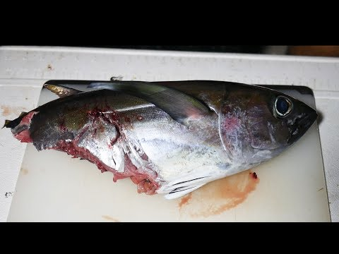 Catch And Cook: Shark Fileted Tuna - Breakfast, Lunch, and Dinner