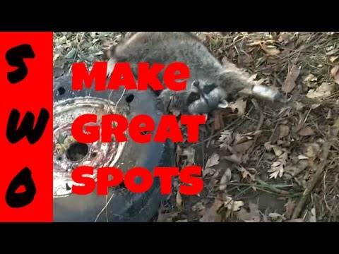 Trapping Raccoons Near Feeders