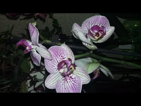 Интернет-магазин цветов - Цветочная Лавка - Самара