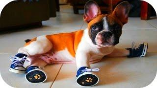 Забавные Животные / Смешные Собаки / Приколы Про Животных 2015/