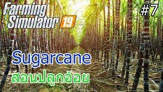 Farming Simulator 19 #7 สอนปลูกอ้อย Sugarcane screenshot 4
