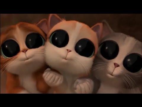 Кот глаза кот в сапогах 146
