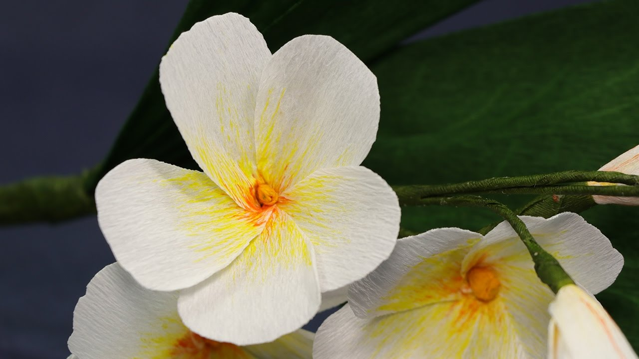 paper flower diy plumeria flower from duplex crepe paper