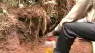 king cobra 2011in[ vava suresh ]kulathupuzha kollam kerala