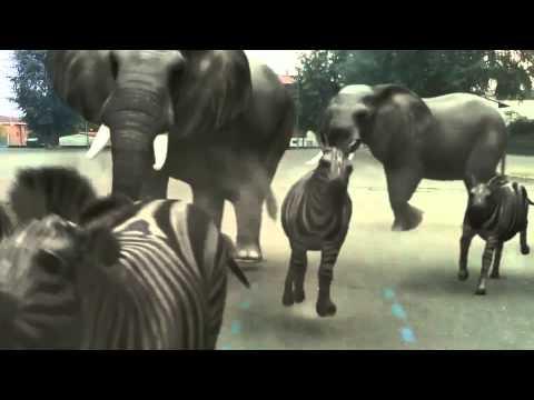 Fxguru Jumanji Animals Attack Youtube