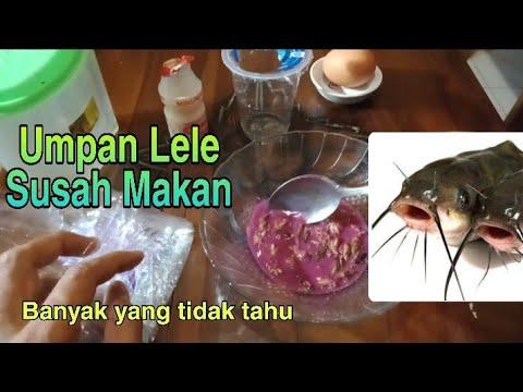 Umpan Galatama Ikan Lele Susah Makan Sangat Ampuh Sangat Jitu Bisa Untuk Kilo Gebrus Juga Youtube