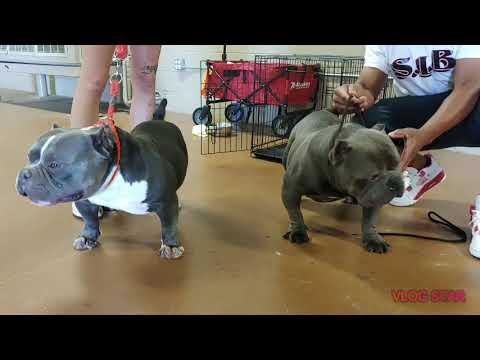 Exotic Bullies At Atlanta Trap N Stack 2