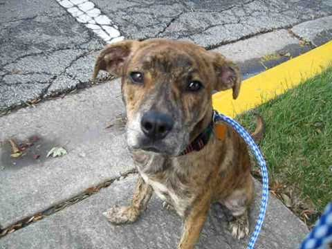 Byron:1:: New Mountain Cur/Mix Puppy - YouTube