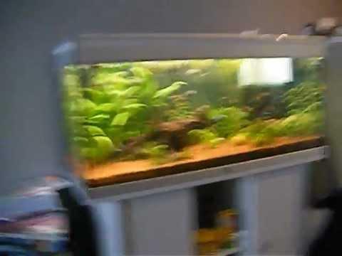 Extremely aquatlantis 200 L tropic aquarium - YouTube XW47
