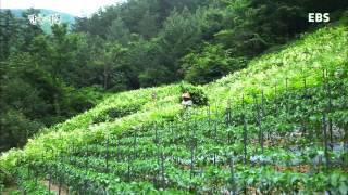 한국기행 - Korea travel_삼척 2부-태고의 신비, 폭포를 가다_#002