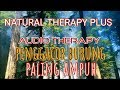Audio Therapy Cuci Otak Pada Burung Kicau Smart Mastering Jernih(.mp3 .mp4) Mp3 - Mp4 Download