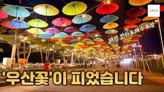 """""""여기는 만리포니아""""..우산꽃 …"""