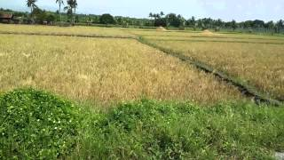 Property for sale in GenSan approx. 10 hectares