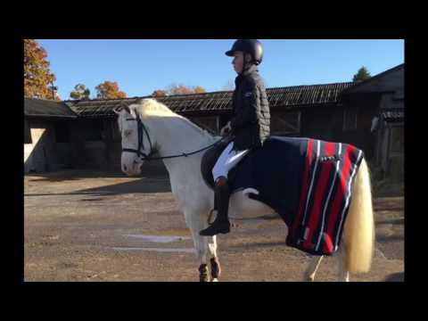Super pony club / BS / hunting pony for sale