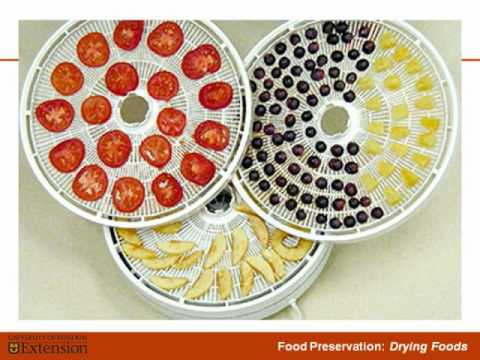 Drying Food - The Basics