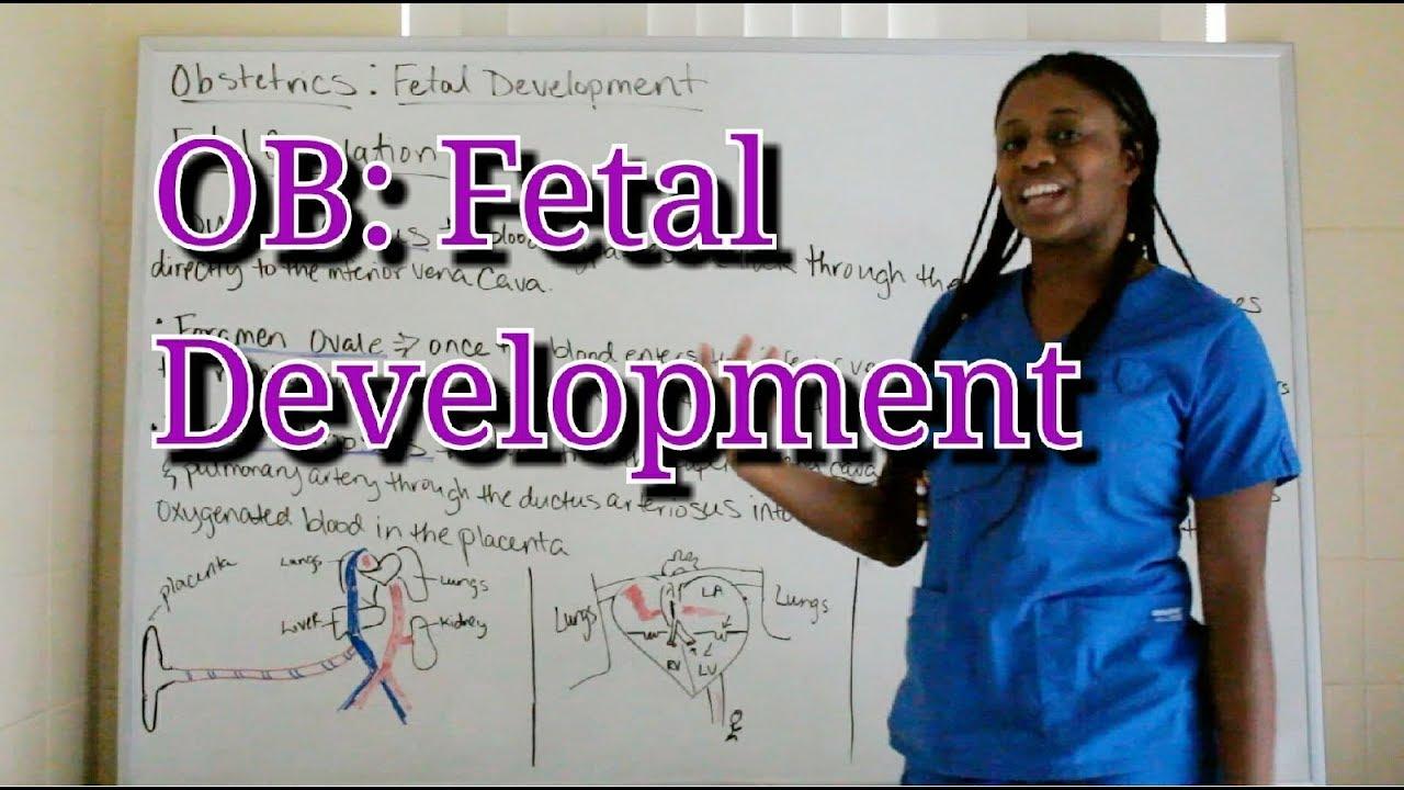 Obstetrics: Fetal Development
