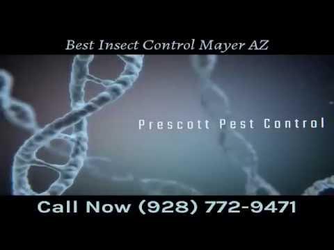 Best Insect Control Mayer AZ
