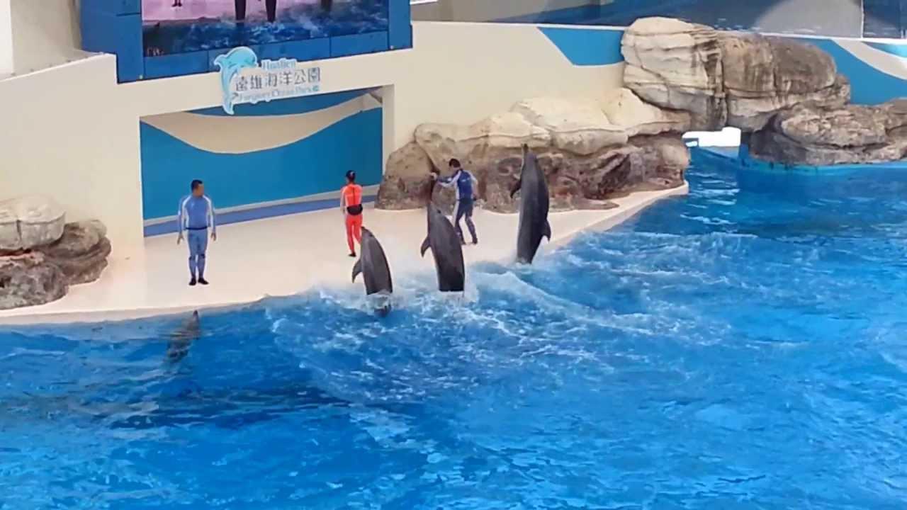 2013/06/30 遠雄海洋公園_海豚表演秀 - YouTube