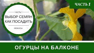 видео Как вырастить огурцы на балконе: выращивание в пластиковых бутылках