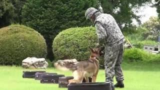 自衛隊のいま「航空自衛隊入間基地・警備犬班」