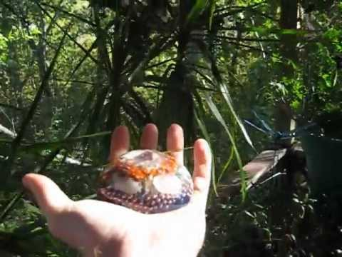 How to make Orgonite for Function and Beauty part 4 of 4