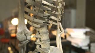 your aching back hhmi biointeractive video