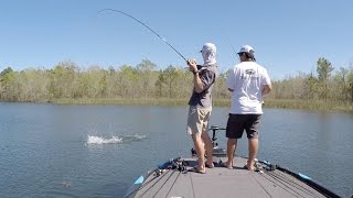Video Sight Fishing for Bass in Clear Water download MP3, 3GP, MP4, WEBM, AVI, FLV Juli 2018