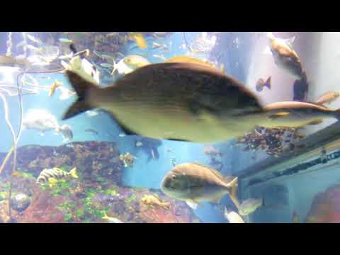Aquarium(水族館)-No.18 The Inland Sea of Japan  瀬戸内海