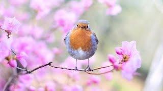 Peaceful Relaxing Instrumental Music, Meditation Calm Music,...