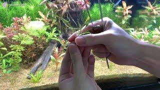 Hướng dẫn kỹ thuật trồng các loại cây thủy sinh chuẩn từ A đến Z