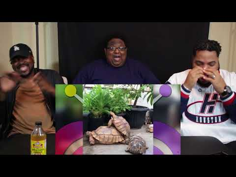 ANIMAL VOICEOVER COMPILATION #2 & #3 - | TRY NOT TO LAUGH(SHOT OF APPLE CIDER VINEGAR)