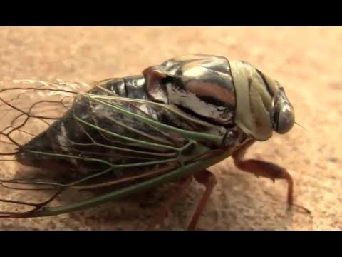 Something strange is happening with insects