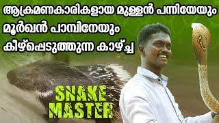 A Porcupine & A Cobra Just Got into Vava Suresh's Hand | Snake Master ep 202 | Kaumudy TV