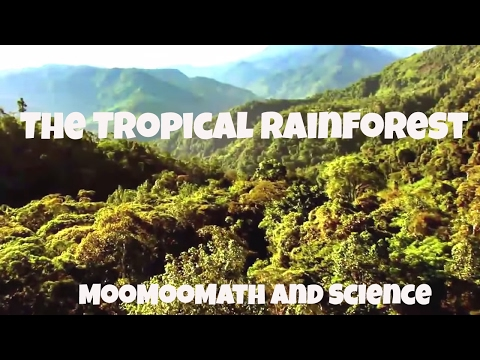 The Tropical Rainforest Biome Facts