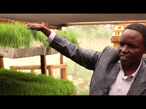 Cool Farming: Growing Plants in Africa without Soil