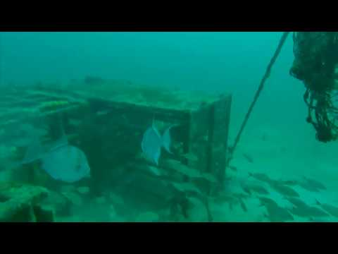 Artificial Reefs W/FAD S Of Pensacola - StrikeLines Fishing Charts
